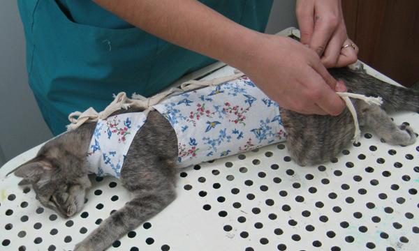 Кастрация котов своими руками 419