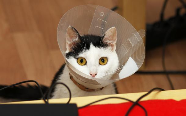 Какой шов лучше для кошки