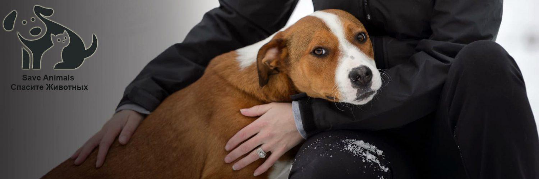 Save Animals | Спасите Животных